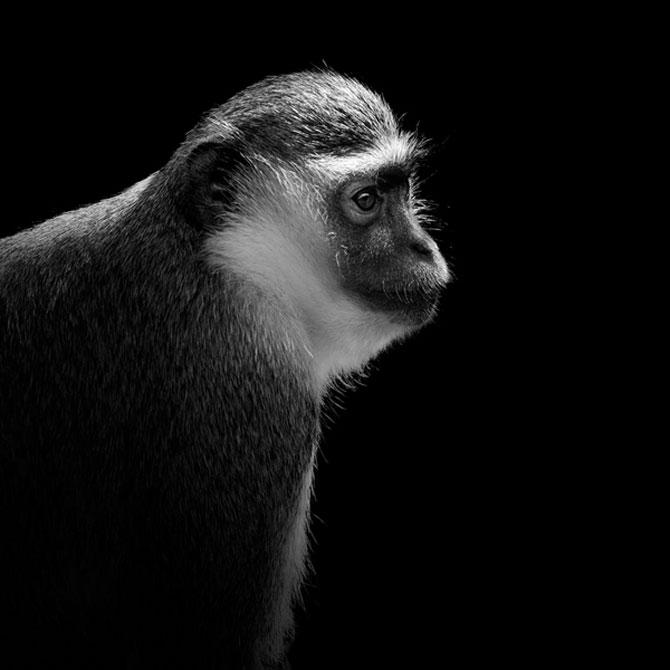 Portrete impresionante de animale, de Lukas Holas - Poza 6