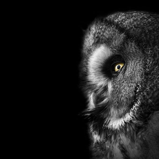 Portrete impresionante de animale, de Lukas Holas - Poza 7