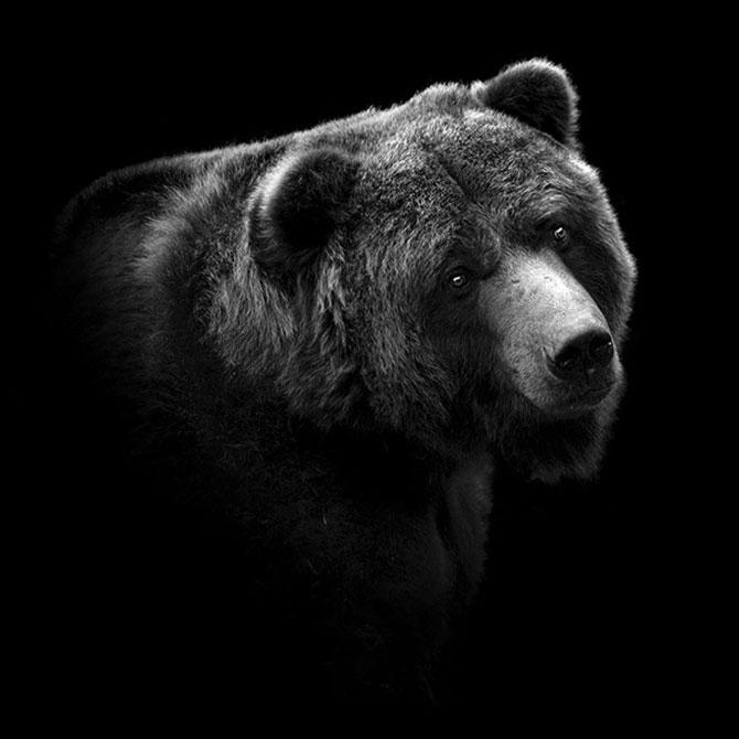 Portrete impresionante de animale, de Lukas Holas - Poza 8