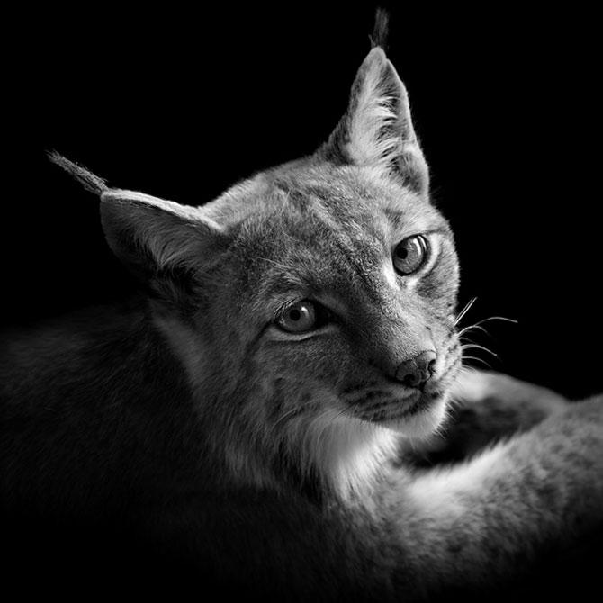 Portrete impresionante de animale, de Lukas Holas - Poza 9