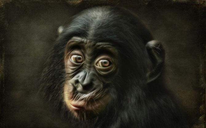 Animale in poze de exceptie - Poza 11