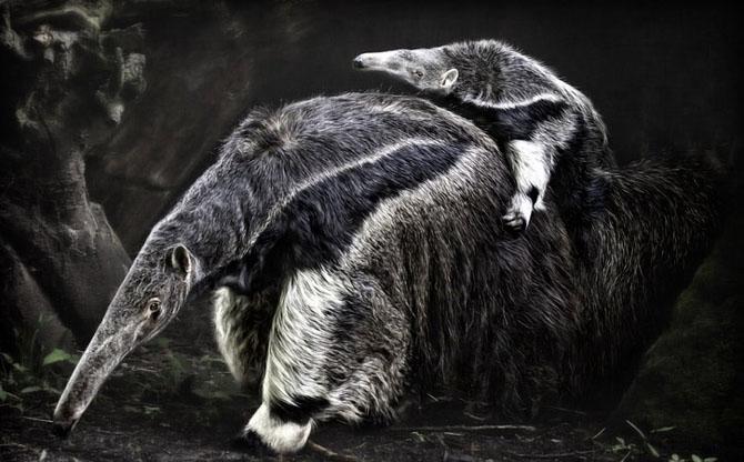 Animale in poze de exceptie - Poza 17