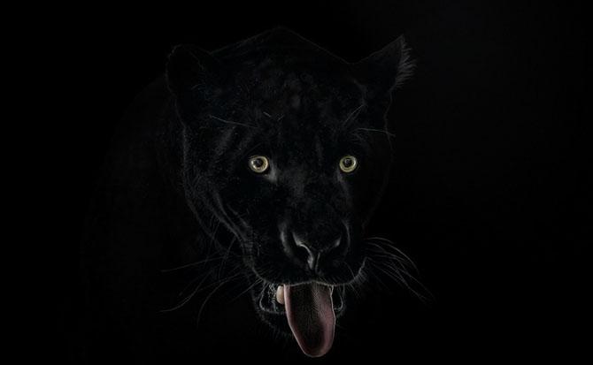Animale in poze de exceptie - Poza 2