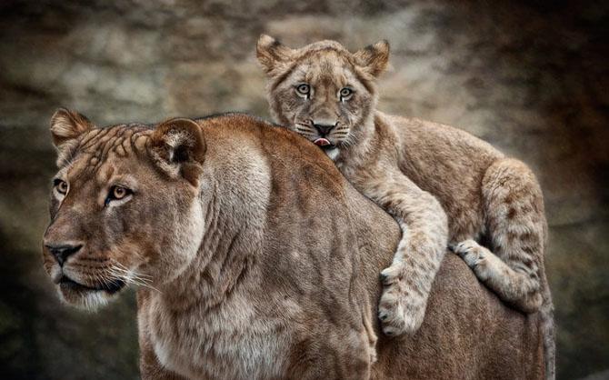 Animale in poze de exceptie - Poza 20