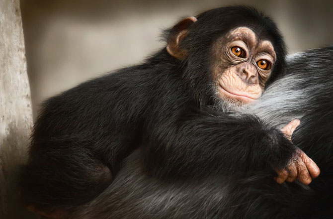 Animale in poze de exceptie - Poza 21