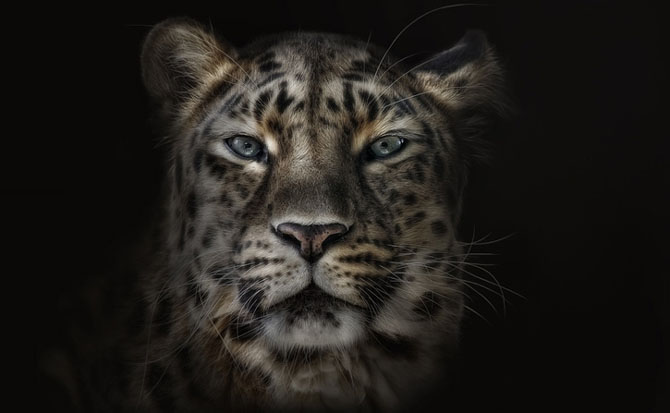 Animale in poze de exceptie - Poza 5