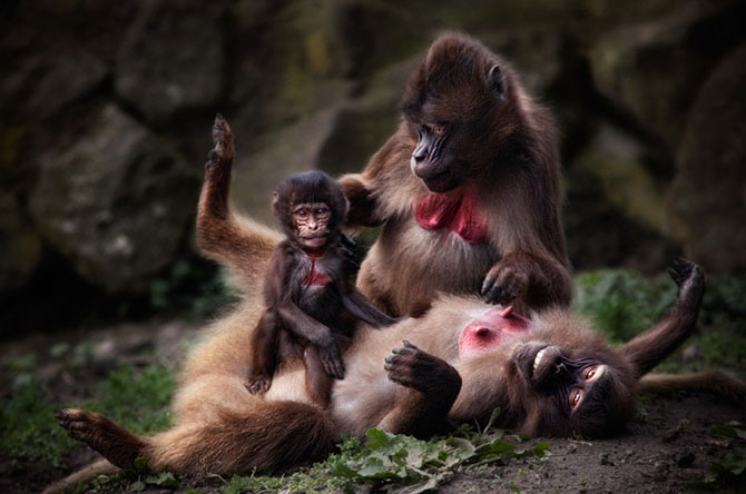 Animale in poze de exceptie - Poza 9