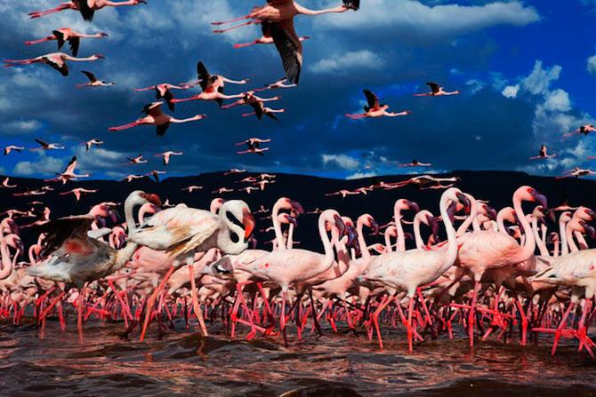Peisaje roz cu flamingi, de Martin Harvey - Poza 2