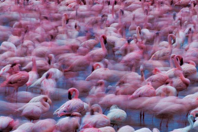 Peisaje roz cu flamingi, de Martin Harvey - Poza 3