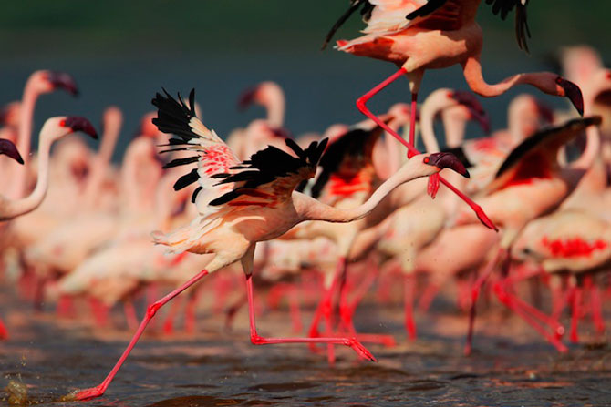 Peisaje roz cu flamingi, de Martin Harvey - Poza 4