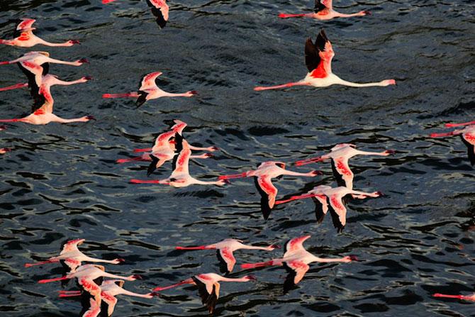 Peisaje roz cu flamingi, de Martin Harvey - Poza 5