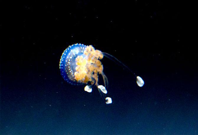 Meduza vedeta si bulinele ei albe - Poza 9