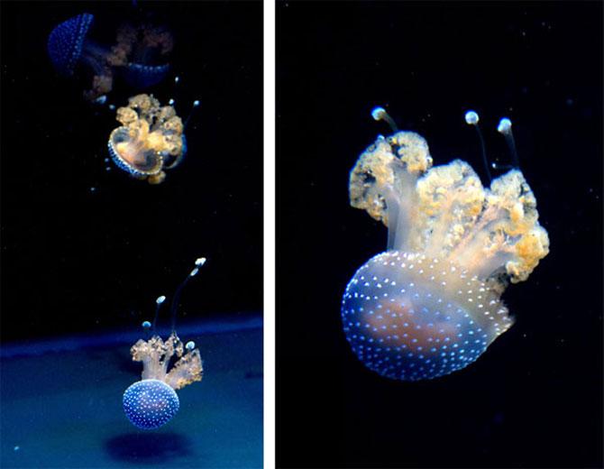 Meduza vedeta si bulinele ei albe - Poza 10