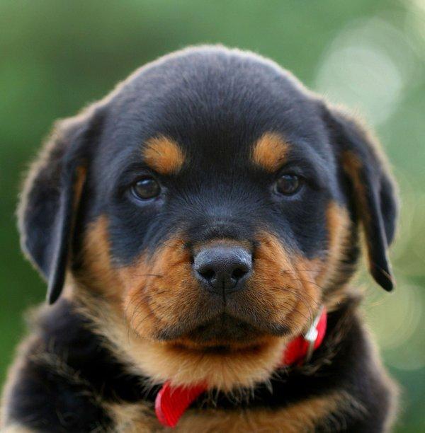 Atentie: Animale simpatice in 45 de poze! - Poza 32