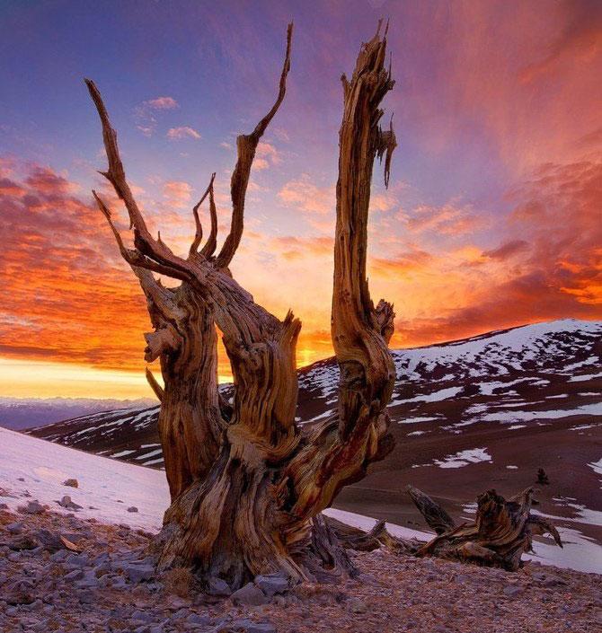 Frumusetea naturii i-a schimbat viata lui Miles Morgan - Poza 1
