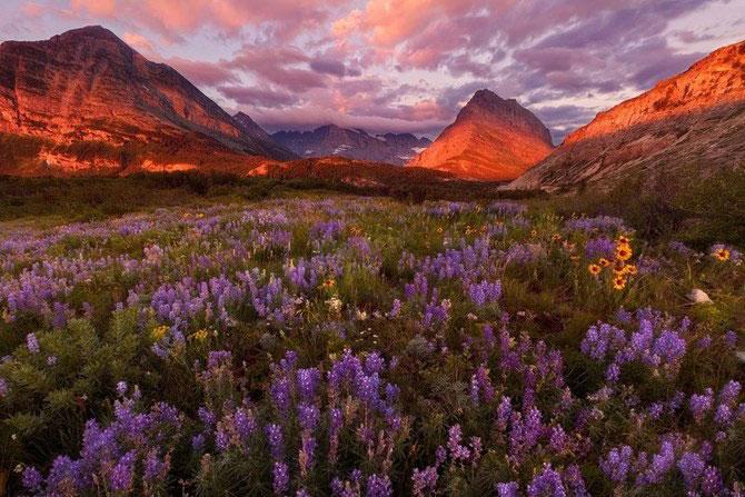 Frumusetea naturii i-a schimbat viata lui Miles Morgan - Poza 14