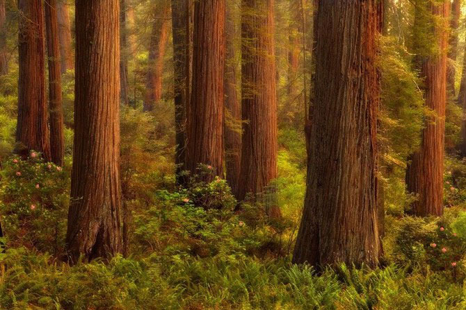 Frumusetea naturii i-a schimbat viata lui Miles Morgan - Poza 15