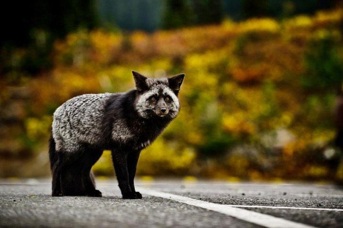 Fotografii animale Mukul Soman