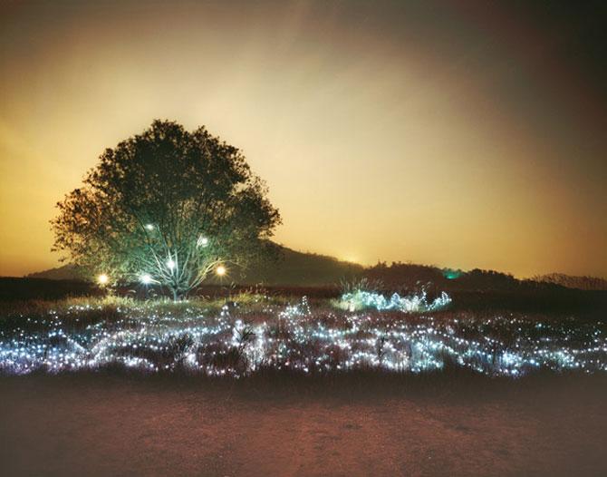 Lee Euneyol aprinde noaptea pe campuri, prin copaci - Poza 1