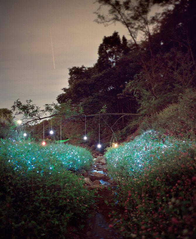 Lee Euneyol aprinde noaptea pe campuri, prin copaci - Poza 3