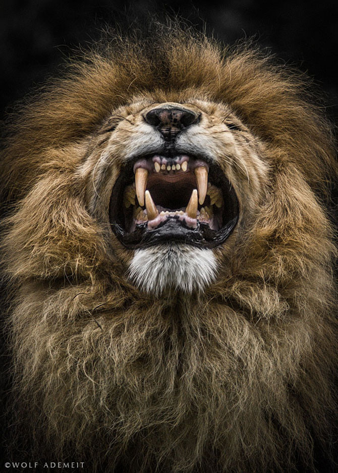 Noi portrete de animale de Wolf Ademeit - Poza 2