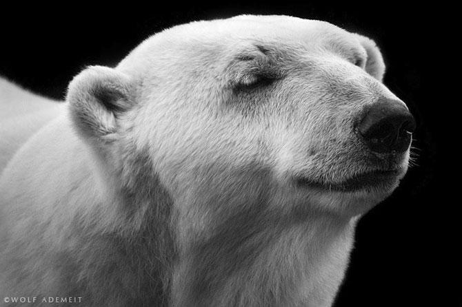 Noi portrete de animale de Wolf Ademeit - Poza 7