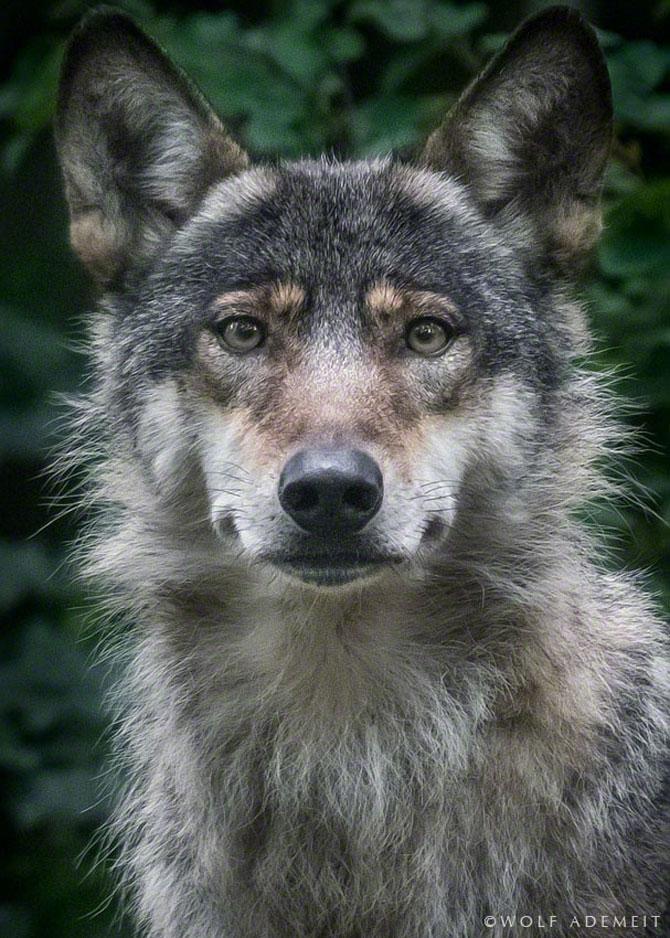 Noi portrete de animale de Wolf Ademeit - Poza 9