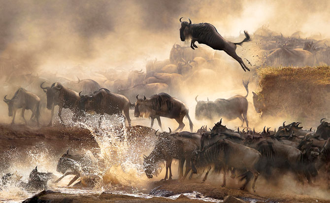 Fotografii impresionante, nominalizate la Sony World Photography Award - Poza 1