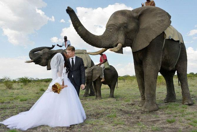 Nunta-safari, calare pe elefanti - Poza 1