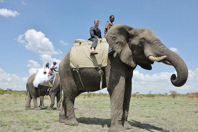 Nunta-safari, calare pe elefanti - Poza 2
