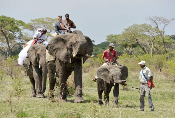 Nunta-safari, calare pe elefanti - Poza 3