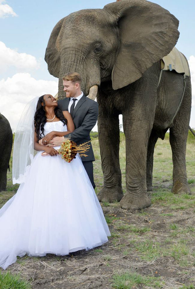 Nunta-safari, calare pe elefanti - Poza 7