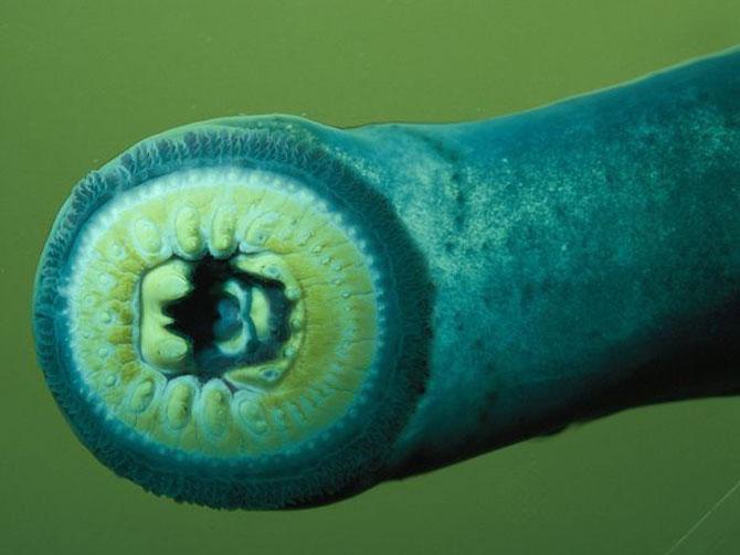 Fotografii subacvatice ocean
