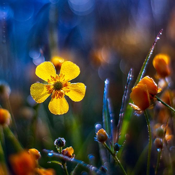 Florile culese de olandezul Oer-Wout - Poza 1