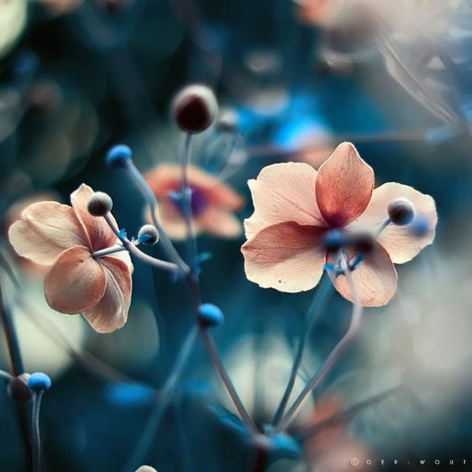 Florile culese de olandezul Oer-Wout - Poza 3