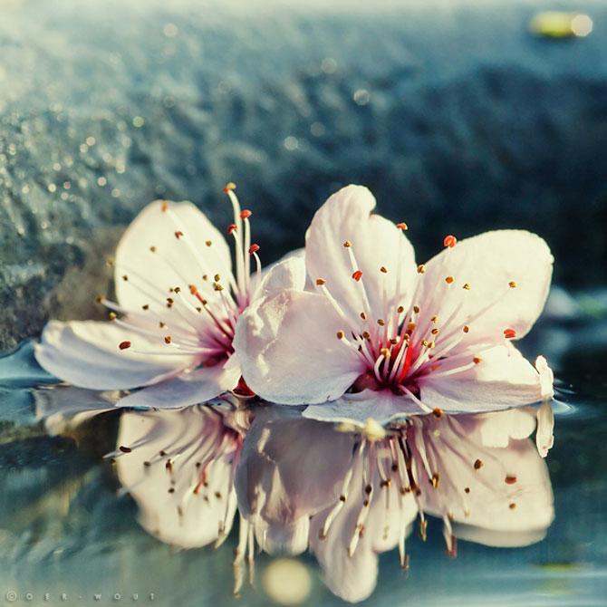 Florile culese de olandezul Oer-Wout - Poza 4