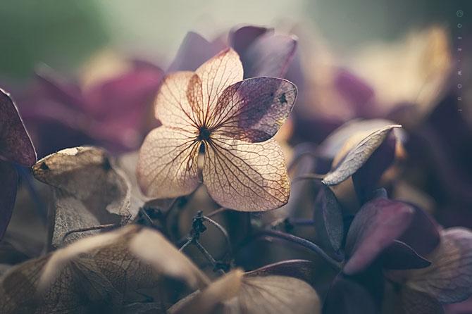 Florile culese de olandezul Oer-Wout - Poza 5