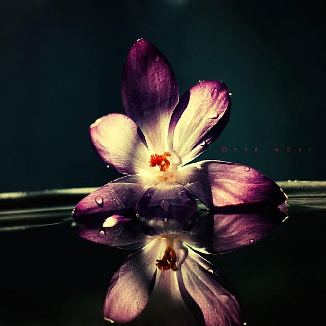Florile culese de olandezul Oer-Wout - Poza 6