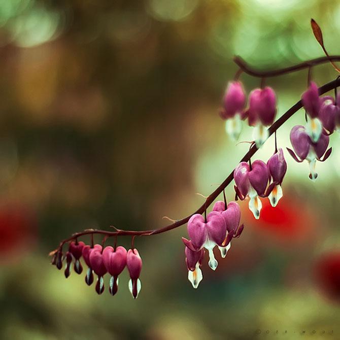Florile culese de olandezul Oer-Wout - Poza 7