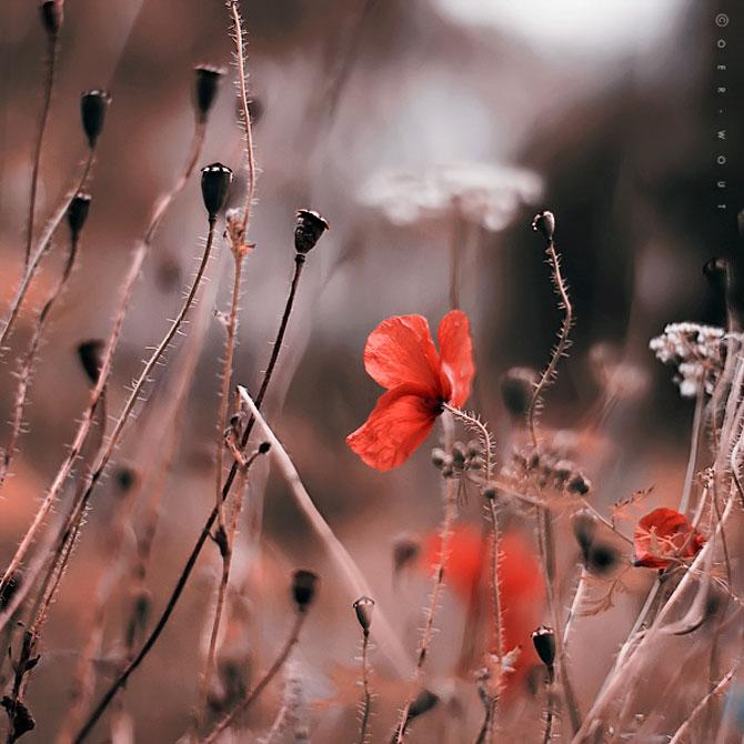 Florile culese de olandezul Oer-Wout - Poza 8