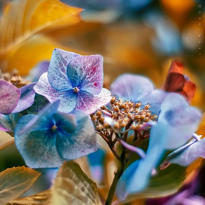 Florile culese de olandezul Oer-Wout - Poza 9