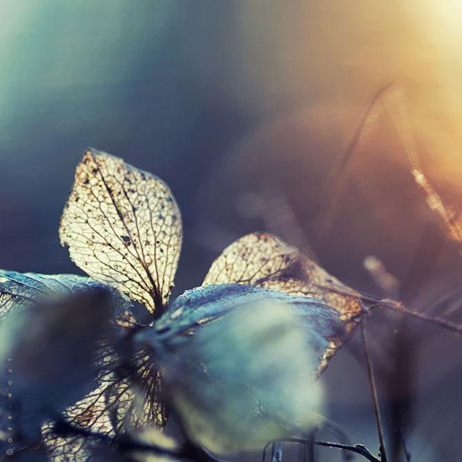 Florile culese de olandezul Oer-Wout - Poza 10