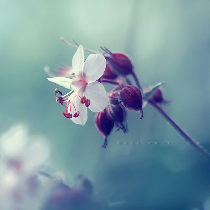Florile culese de olandezul Oer-Wout - Poza 11