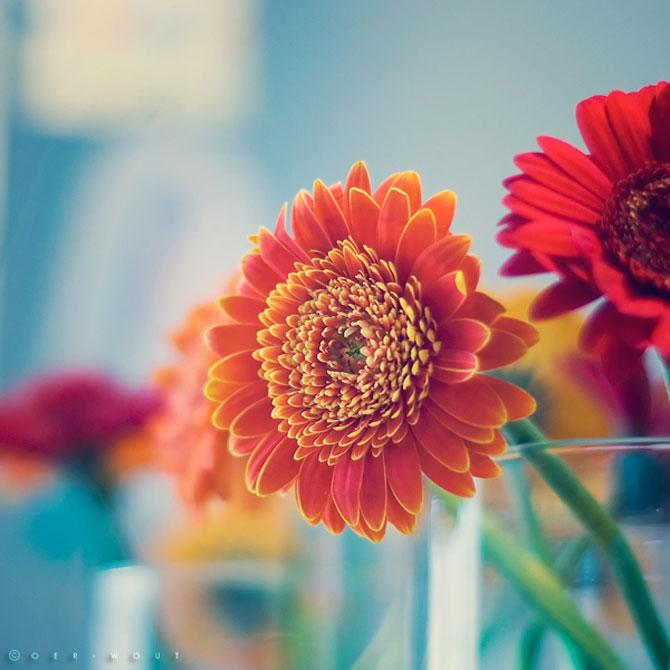 Florile culese de olandezul Oer-Wout - Poza 13