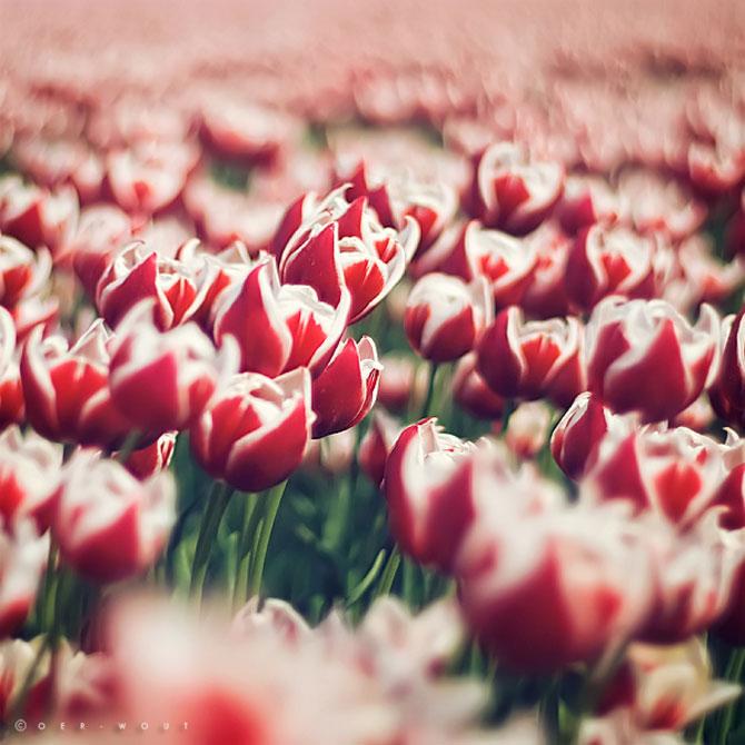 Florile culese de olandezul Oer-Wout - Poza 14