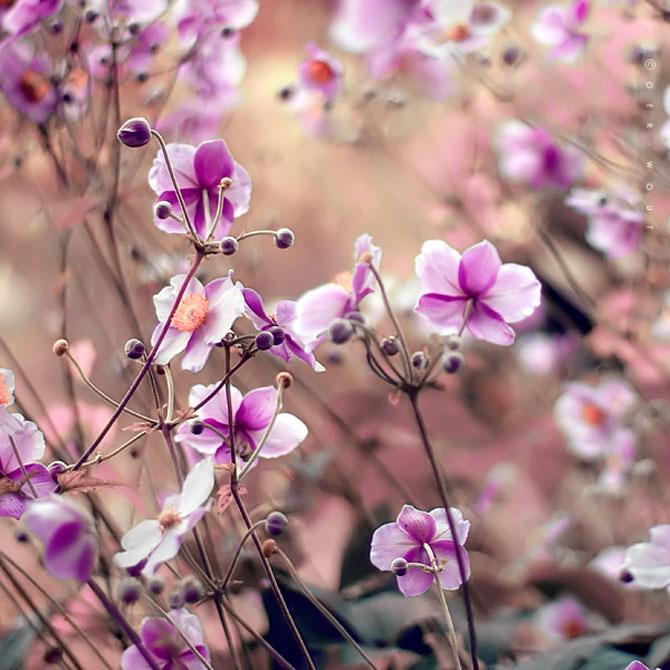 Florile culese de olandezul Oer-Wout - Poza 15