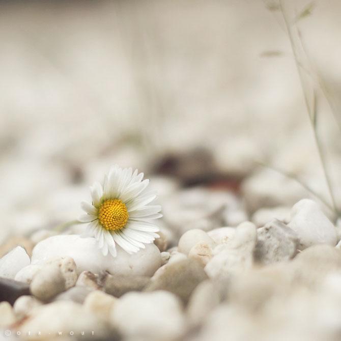 Fotografii flori Oer-Wout
