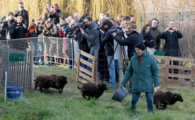 Oile care tund iarba la Paris - Poza 2