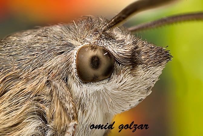 Fotografii intre 4, 5, 6 ochi de Omid Golzar