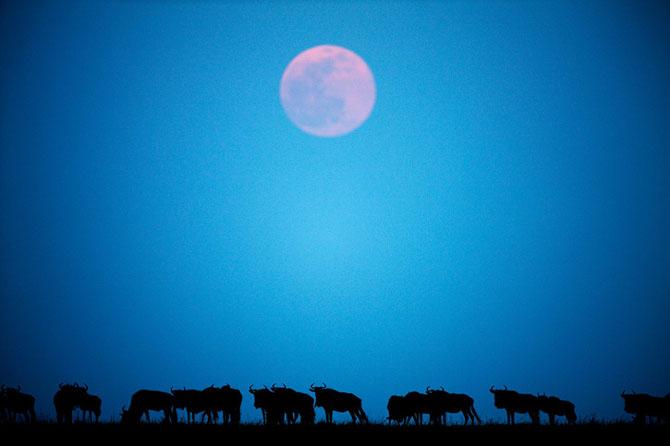 Asa poze nu vezi in fiecare zi: Paul Souders - Poza 1